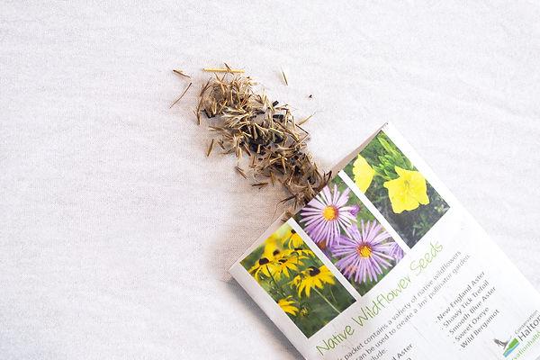 Wildflower Pack 4.jpg