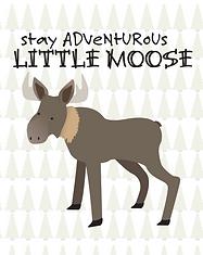 Moose - Baby Animal