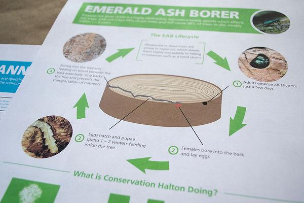 EAB Mailer 1.jpg