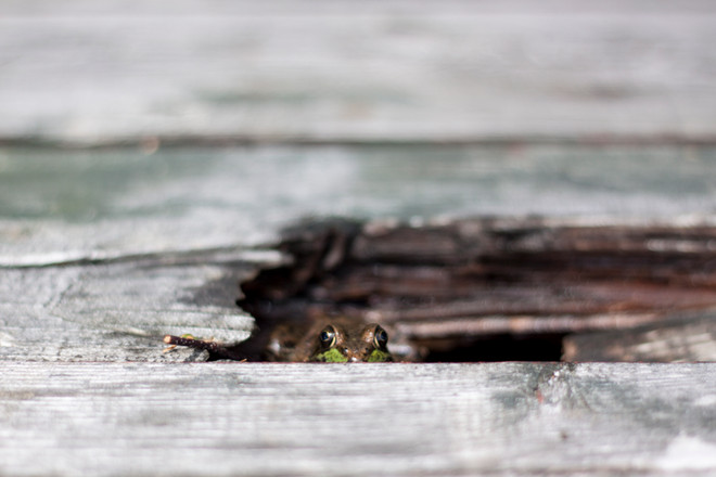 Nature - Frog