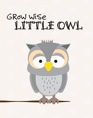 Owl - Baby Animal