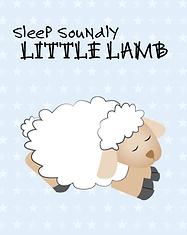 Sheep - Baby Animal