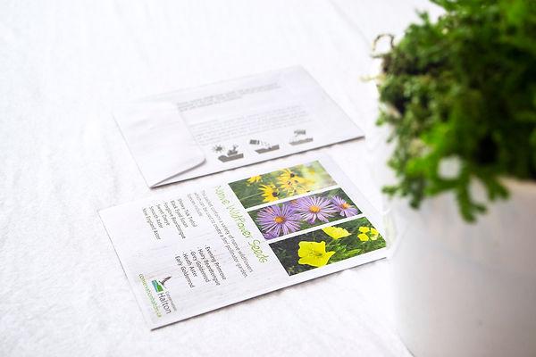 Wildflower Pack 1.jpg