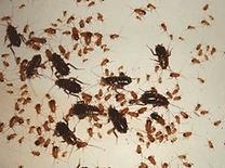 уничтожение тараканов в Сургуте