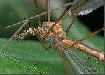 обработка от комаров сургут