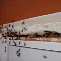 уничтожение муравьев в Сургуте и ХМАО