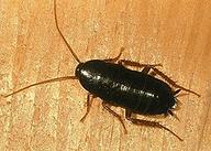 борьба с тараканами в Сургуте