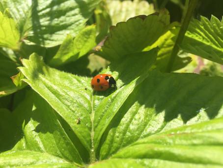 Garden Diaries, part 5