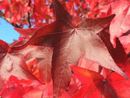 A Seasonal Shift: Autumn