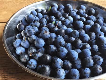 An Autumnal Harvest: Blackthorn & Sloe Gin