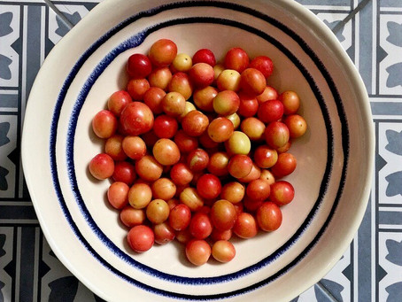 Cherry Plums; and Other Stoned Fruits