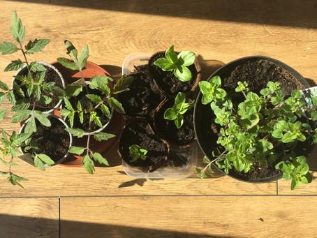 Garden Diaries, part 1