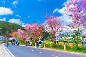 Đà Lạt - the love city