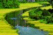 Spring in Ninh Bình.jpg