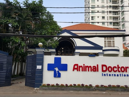 Pet needs a doctor: Veterinary in Ho Chi Minh City | Pet Care in Saigon