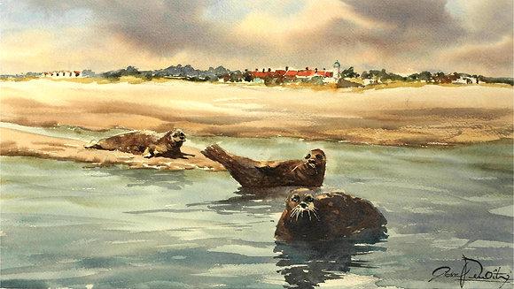 Aquarelle - Phoques en Baie de Somme