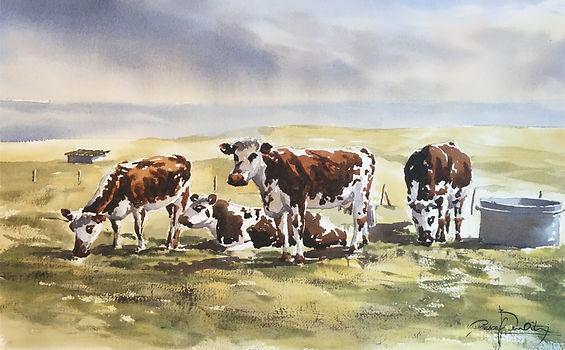 Vaches normandes, 33 x 53 cm.jpg