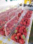 strawberries agriberry.jpg
