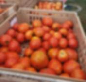 old tavern tomatoes_edited.jpg