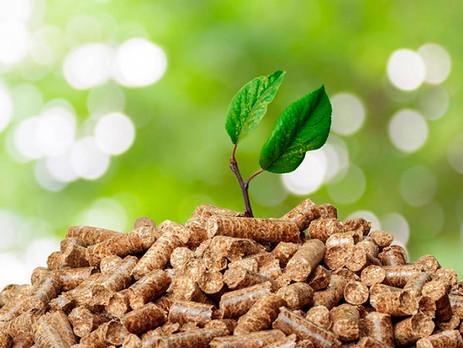 biotecnología: Biomasa