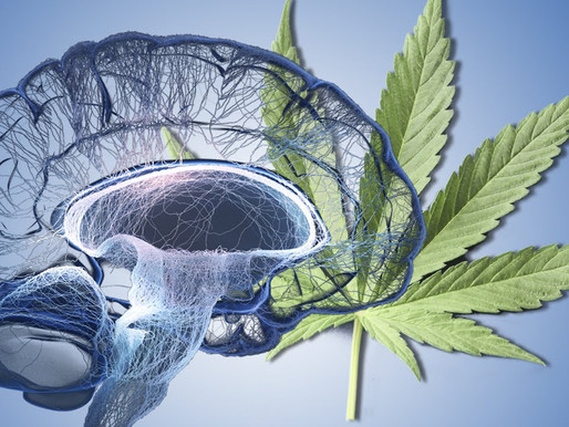 How does THC & CBD Affect the Mind & Body?