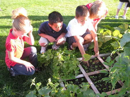 Project-Based Learning: Little Hands on the Farm