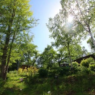 ㊴朝日の当たる裏庭