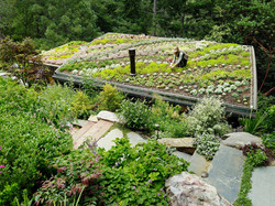 94 garden pic