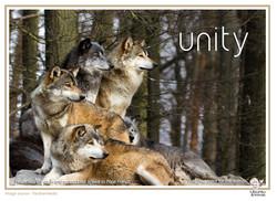 wollves unity copy.jpg