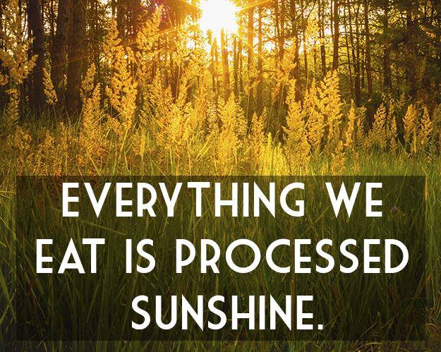 86 everything we eat processed sunshine