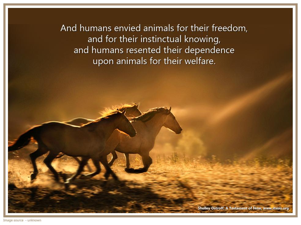 34 wild horses