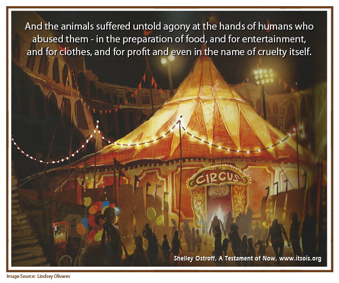 31 animals suffered copy