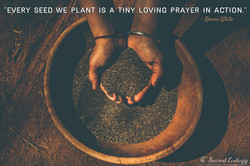 91  every seed we plant
