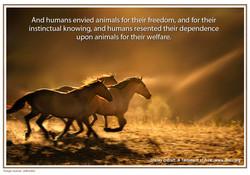 34 wild horses copy