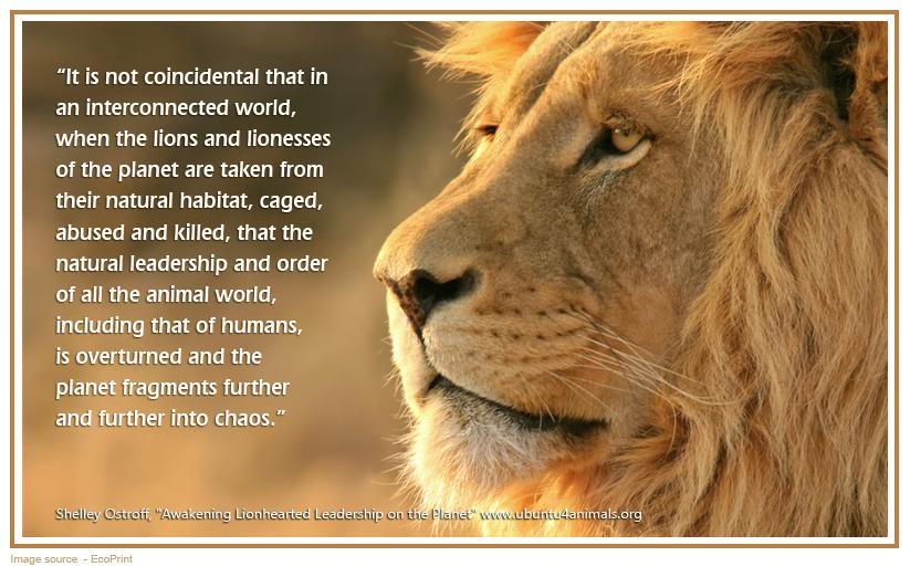 lion copy.jpg