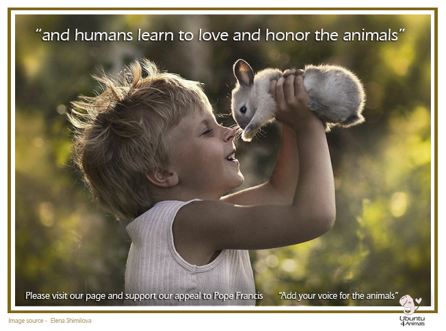 Ubuntu 4 Animals - Gallery - Add your voice for the Animals