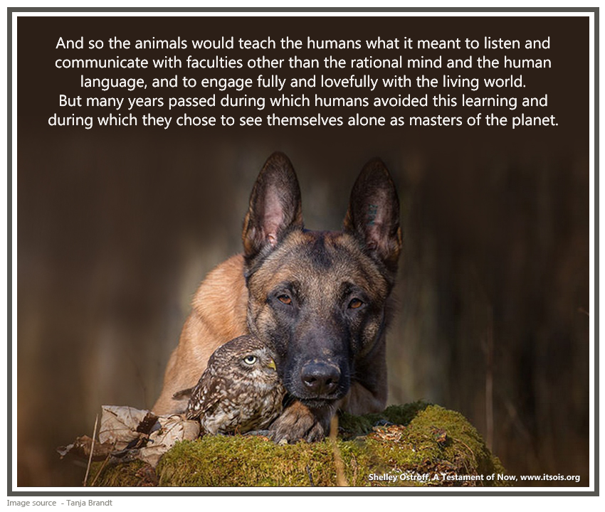 33 dog and owl