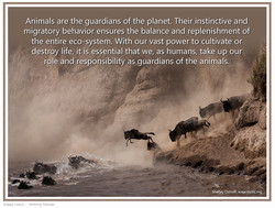 animals are the guardians copy