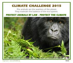 Climate challance 4 gorilla.jpg