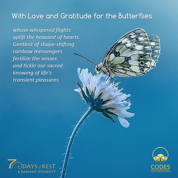 butterflies love and gratitude.jpg