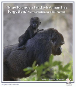 pray to understand - gorilla copy.jpg
