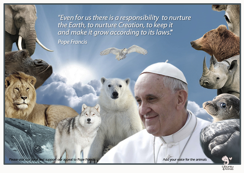 Pope Francis  quote copy.jpg
