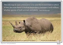 rhinoceros attenborough quote copy.jpg