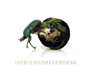 Interconnectedness and life consciousness evolving