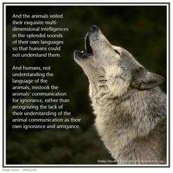 32 wolf communicate