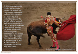 35  bull fighting copy