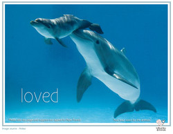dolphin loved copy.jpg