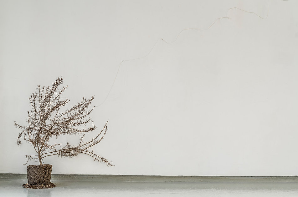 2013 RICARDO COELLO GILBERT - El principio de la eternidad