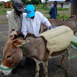 3,043 Donkeys
