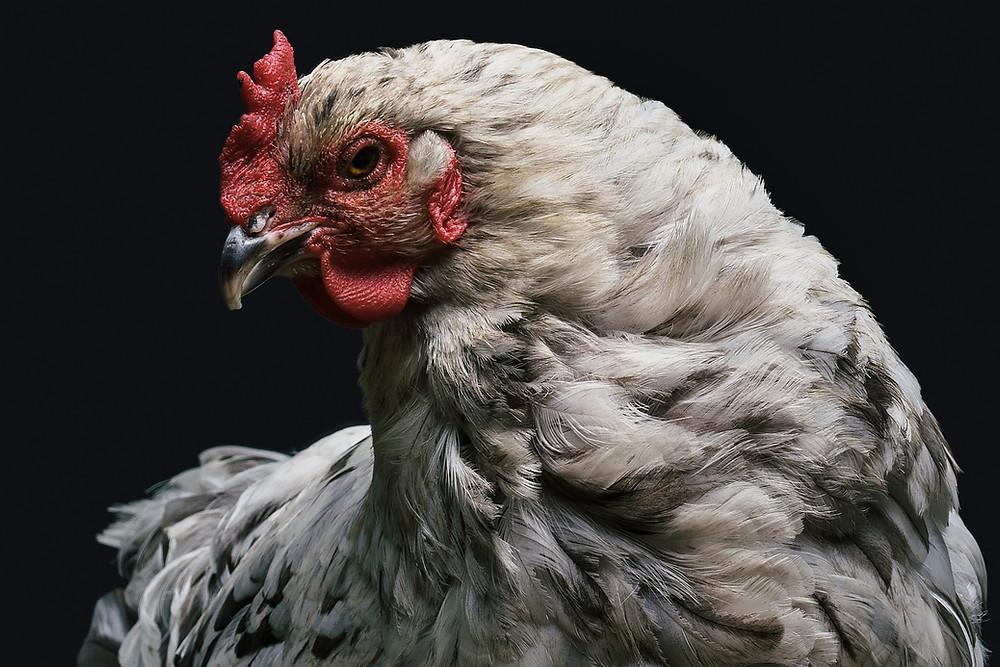 Yom Kippur chicken tel aviv israel